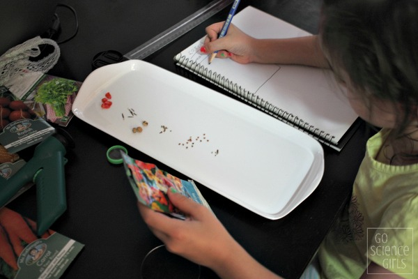 Comparing seeds - nature study science activity for kids