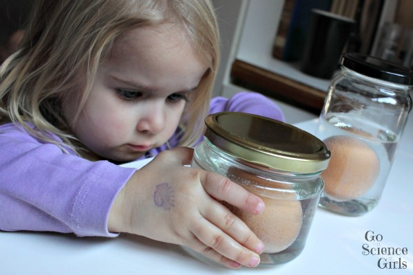 Toddler studying the carbon dioxide bubbles caused by dissolving eggshell in vinegar