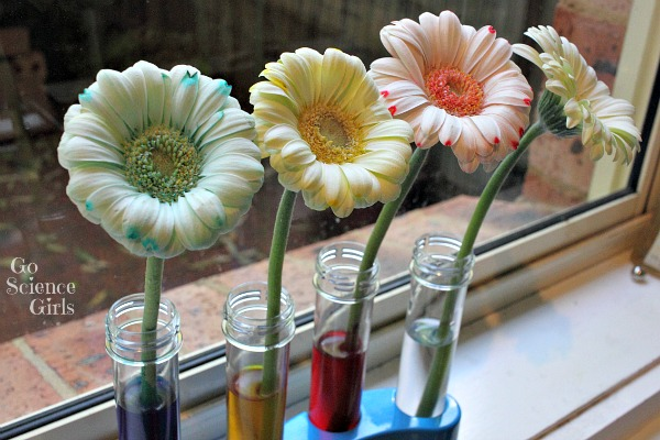 Colour changing flowers experiment go science girls for Color changing roses
