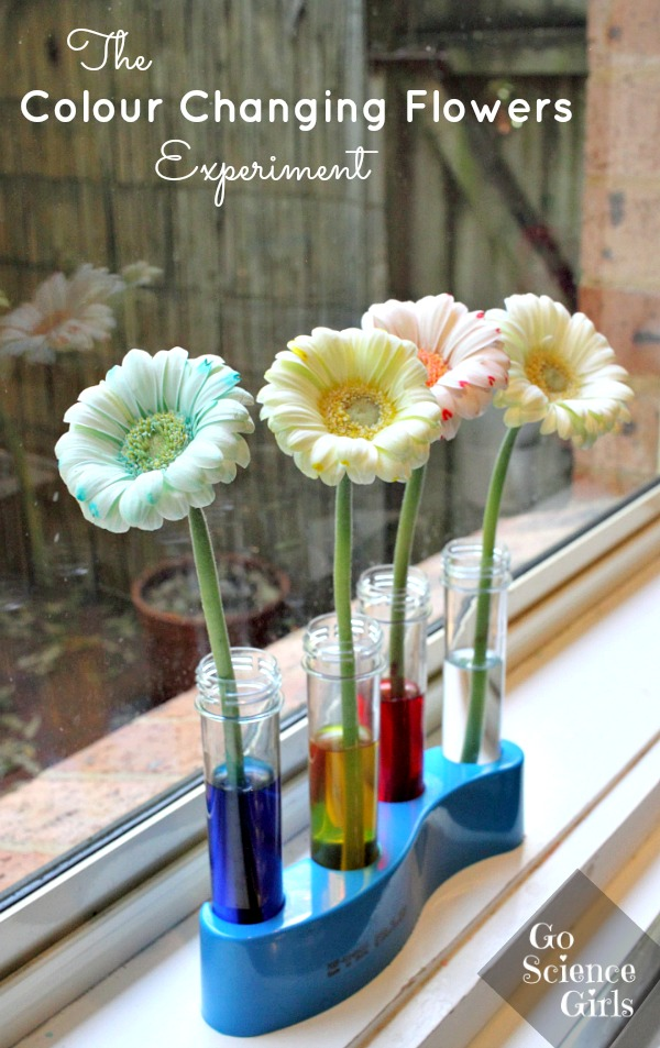 Colour changing flowers experiment go science girls for Fun at home projects