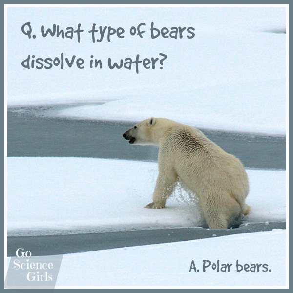 What type of bears dissolve in water Polar bears! This and loads more science jokes at Go Science Girls