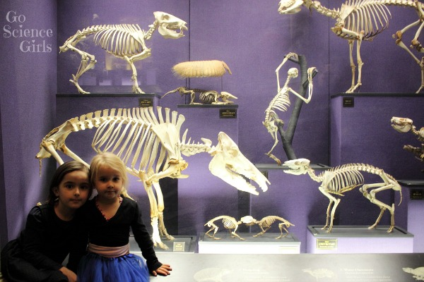 Animal skeletons at the Australian Museum