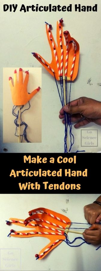 How to make a cool articulated hand with tendons and bendable fingers anatomy science fun for kids