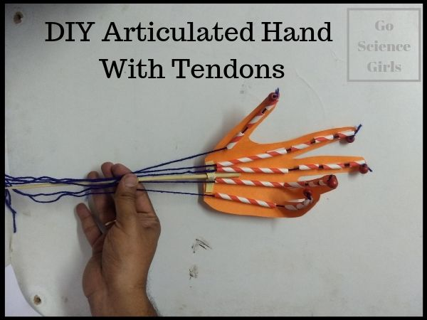 How to make an articulated hand with tendons