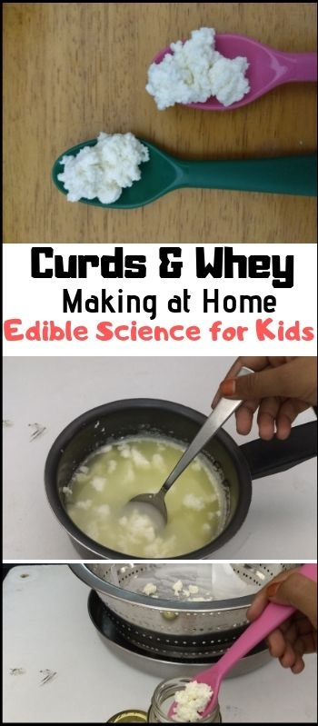 How to make curds and whey - edible science for kids