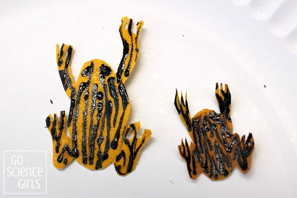 waiting-for-the-corroboree-frogs-to-dry