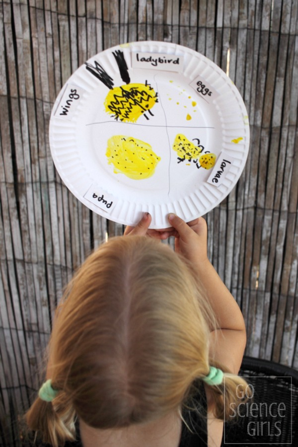 Paper plate lifecycle of the fungus-eating ladybird - nature study activity for kids.