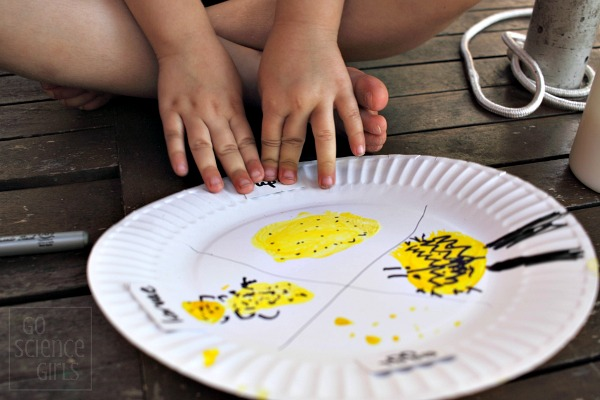 Sticking labels onto her paperplate ladybird lifecycle