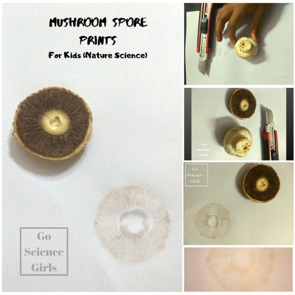 Nature science make a mushroom spore print