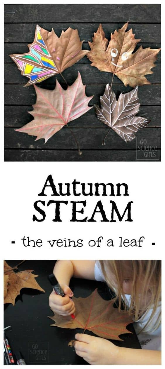 Autumn STEAM - tracing the veins of a leaf. Fall STEM + Art for Kids
