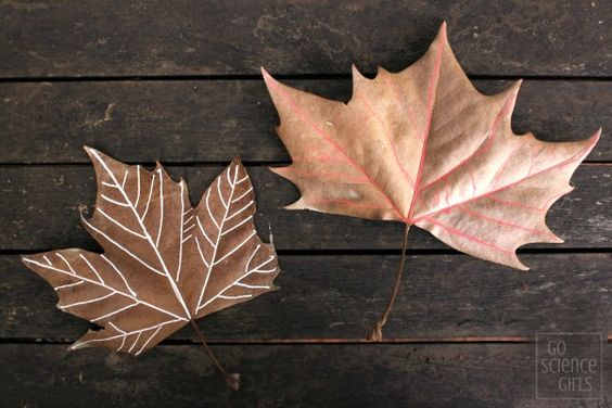 Decorating and drawing veins on autumn (fall) leaves
