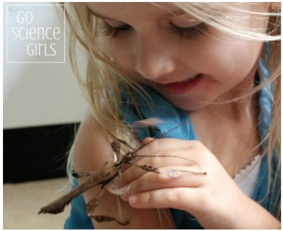 Toddler holding a spiny leaf phasmid