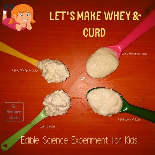 Lets Make Whey Curd edible science experiment for kids