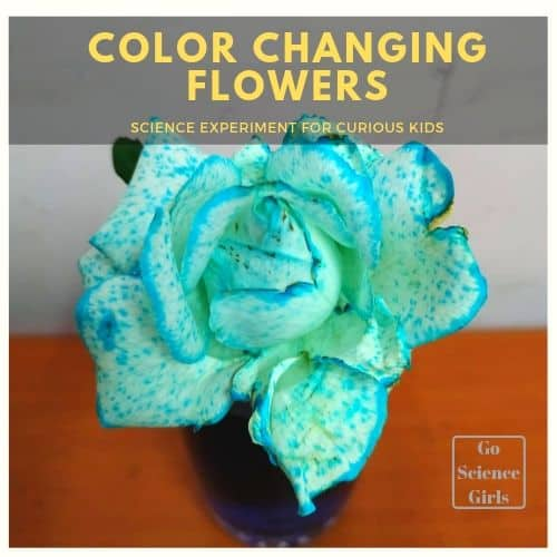 Why Do Flowers Change Color In Food Coloring Experiment