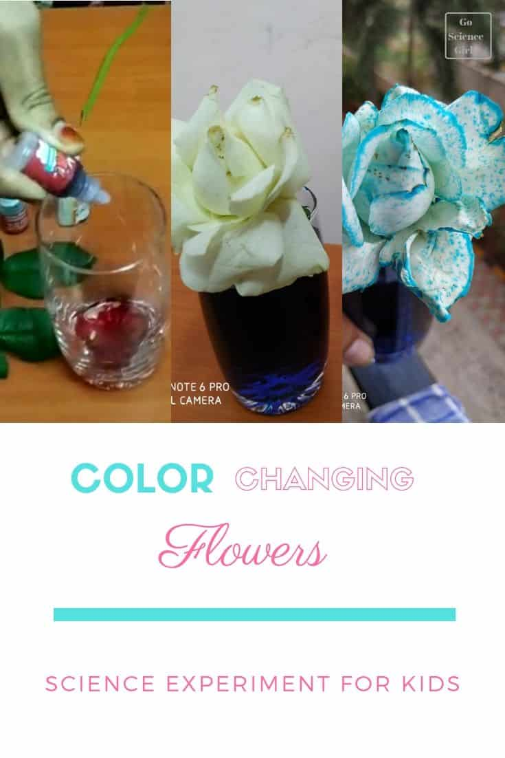 Why Do Flowers Change Color in Food Coloring - Experiment ...