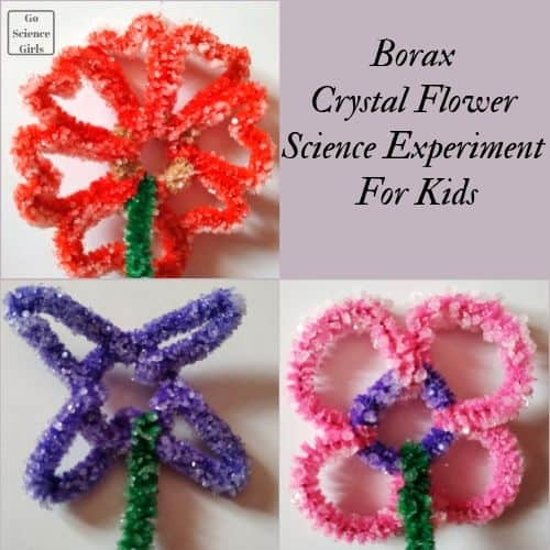 Borax Crystal Flower Science Experiment For Kids