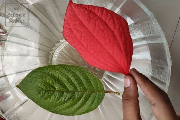 drop leaves in water respiration of plants science experiments