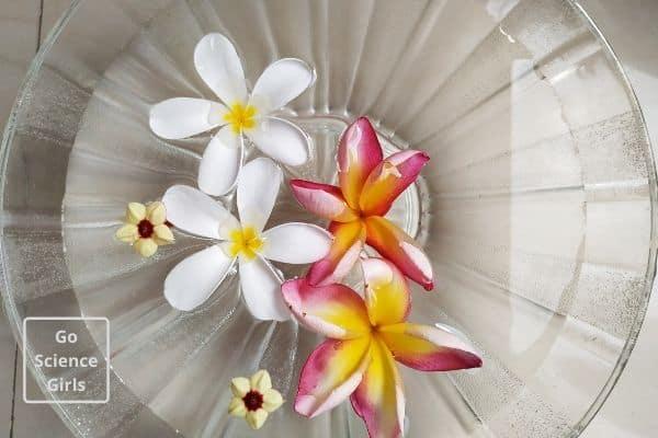 flowers breathing experiment dip in water