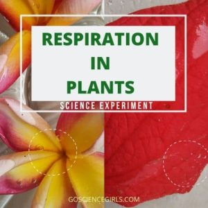 respiration in plants science activity