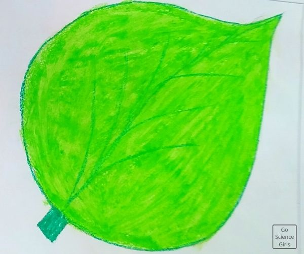 Colored  Leaf For 3d Model Life Cycle Of Silk Worm