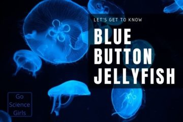 Blue Button Jellyfish Facts