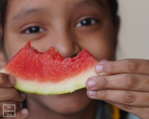 Watermelon Taste Science Activities