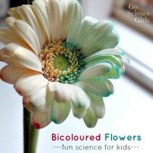 Bicoloured Flowers
