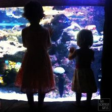 Visiting Manly Sea Life Sanctuary {with kids}